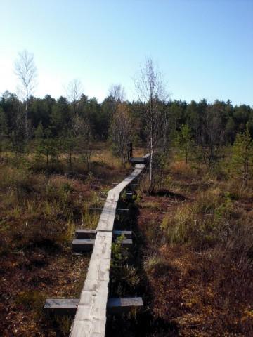 Деревянные мостки через болото