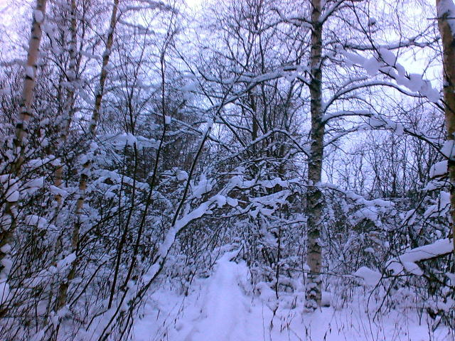 Просто зимний лес